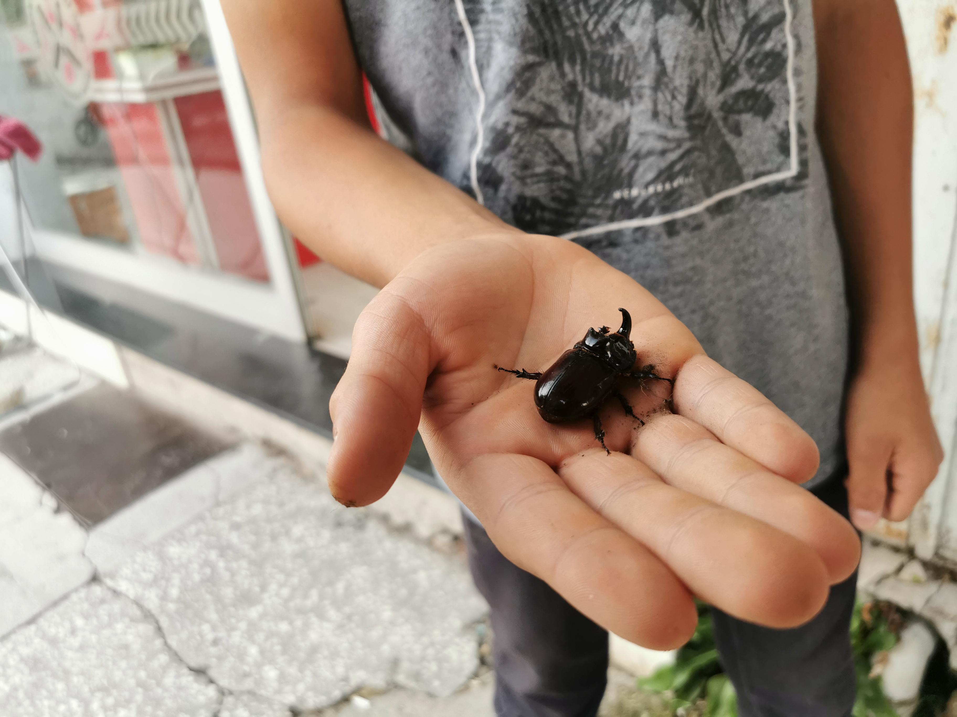 Dinar'da Değeri 90 Bin Dolar Olan Bir Böcek Türü Bulundu